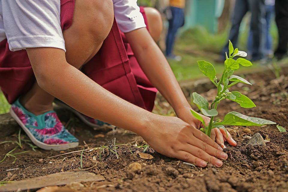 Comment choisir un professionnel en jardinage ?